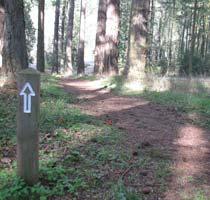 1-way-path