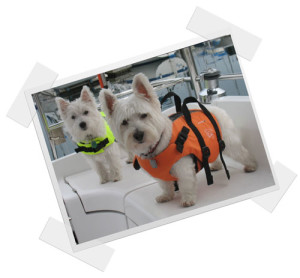 Westies-on-BG